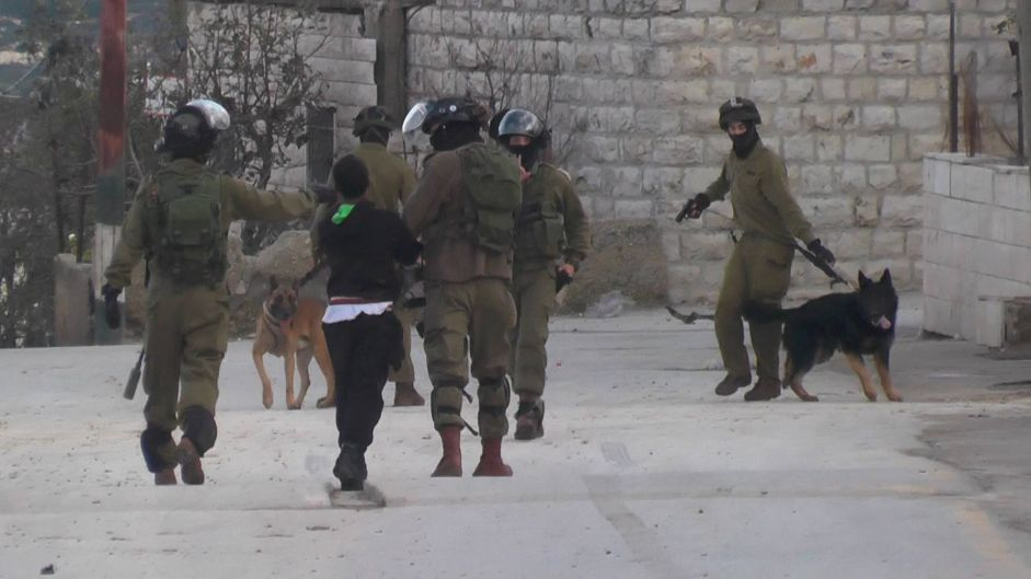 Video of Israeli soldiers using dogs against Palestinian boy sparks outcry